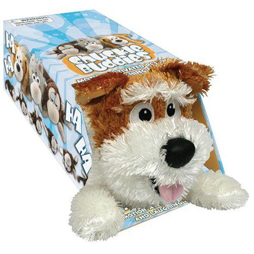 Śmieszek-Azorek-turlejący-się-pies-warszawa