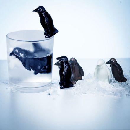 chłodzące pingwiny śmieszny prezent dla niego