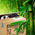 Skarbonka psotna panda prezent dla dziewczyny