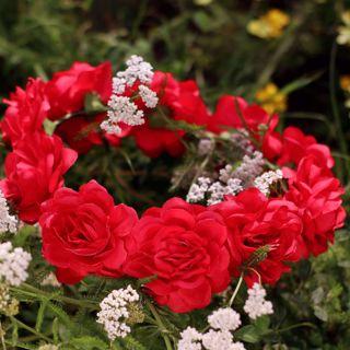 Wianek czerwone piwonie akcesoria na wieczór panieński