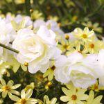 Wianek dla Panny młodej biały wianek na wieczór panieński