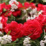 Wianek czerwone piwonie wianki na głowę na wieczór panieński akcesoria na wieczór panieński