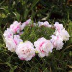 Wianek piwonia nakrapiana różowo biała akcesoria na wieczór panieński
