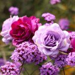 Wianek na głowę fioletowy dla niej