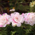 Wianek piwonie nakrapiane różowo białe gadżety na wieczór panieński warszawa