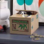 Skarbonka psotna panda prezent na święta dla siostrzenicy